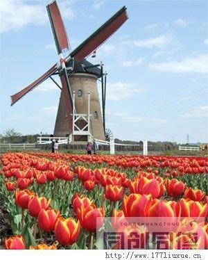 荷兰是一个高福利的国家,在新移民抵达荷兰并领取ID卡,新移民及其配偶和子女,在前5年里即可以享受除选举权和失业金、救济金以及购房零首付和政府补贴的廉价房以外的全部荷兰公民同等福利待遇(新移民在荷兰贷款购买房产物业须缴付10%的首付)……