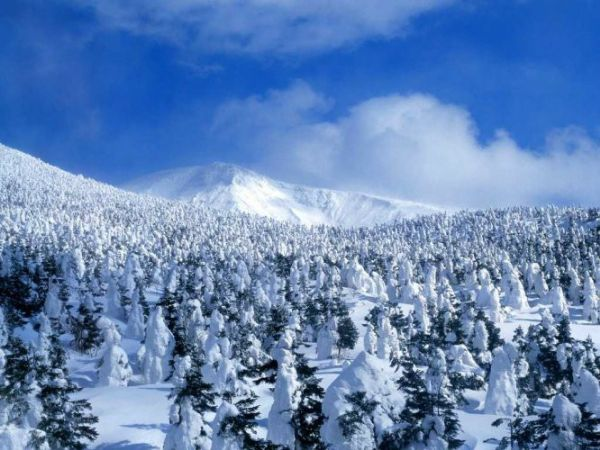 关于描写冬天的诗句,古诗