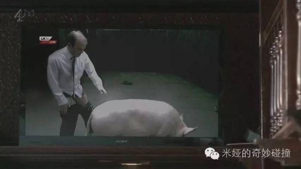 卡梅伦日猪是真的吗_卡梅伦曾经 真的日 过猪
