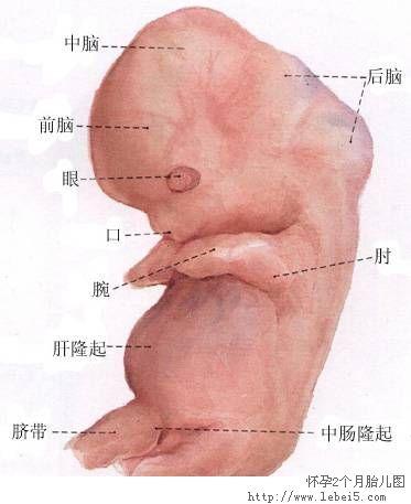 鼻部血管高清结构图